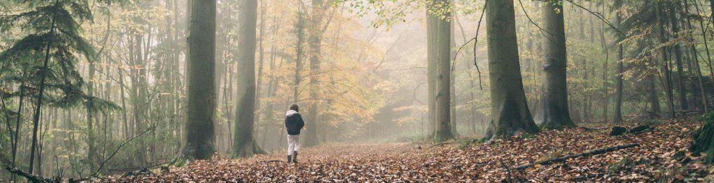 Person walking in the autumn sun